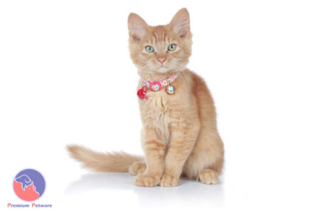 Hunter Cat Collars