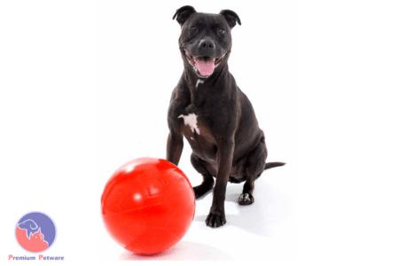 AUSSIE DOG STAFFIE BALL - MARKED DURING SHIPPING
